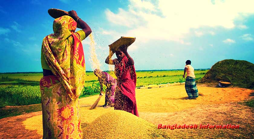 Nabanna In Bangladesh